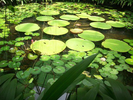 Jardin Botanico 055